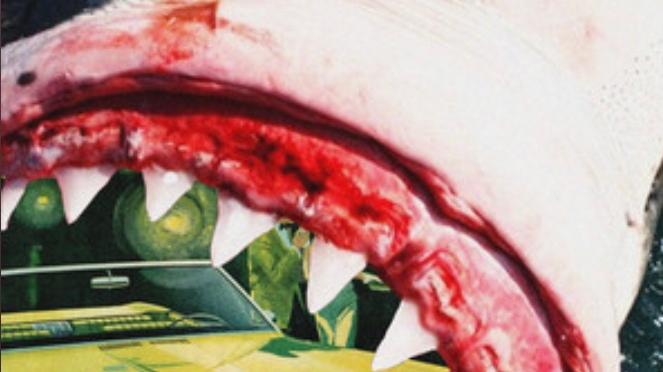 Stream Album | Shark 🦈 Report – @BigKahunaOG x @mondaynighthb #W2TM